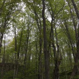 grove of treams